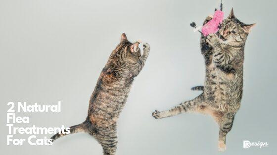 2 Natural Flea Treatments For Cats