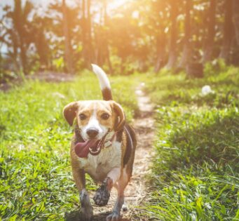 5 Tips to Train Your Dog