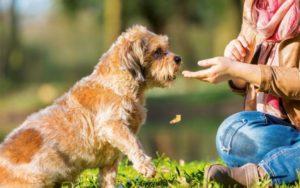 Exercise dog trainable