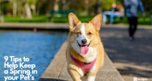 9 Tips to Help Keep a Spring in your Pet's