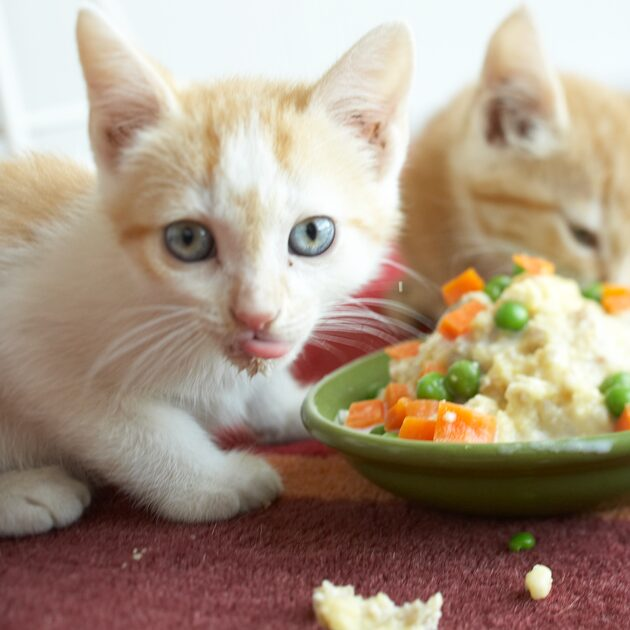 backing organic food for cats