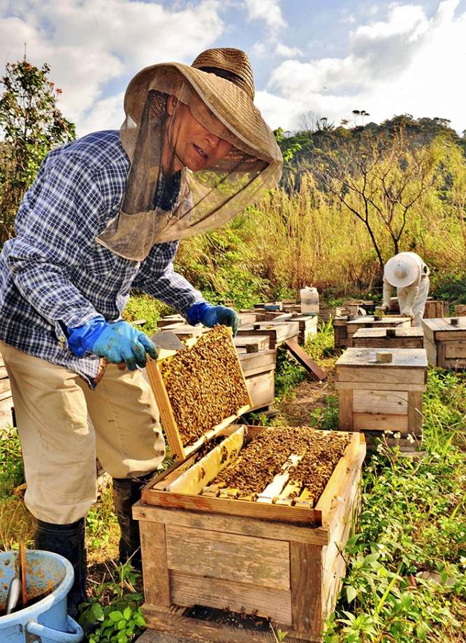 Beekeeping guide for beginners