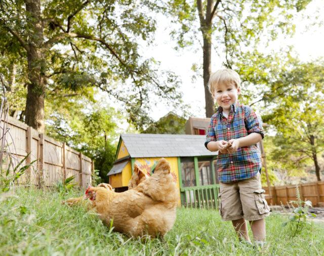 do you need to raise backyard chickens