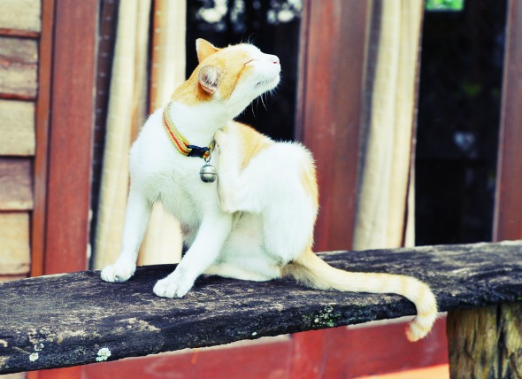 Best 3 flea prevention for cats