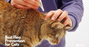 Best Flea Prevention for Cats
